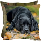 Cushion Pretty Please